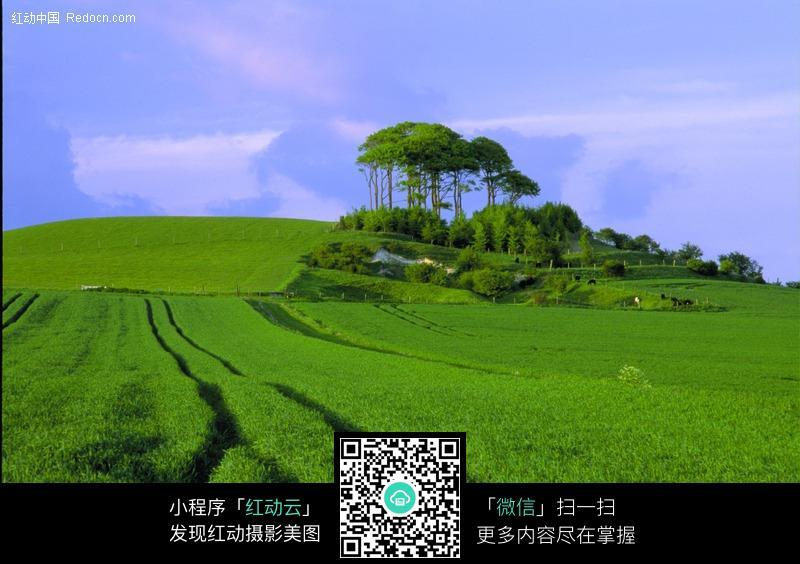 宽阔种满庄稼的田地图片