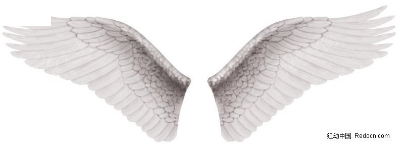 白色翅膀图片素材