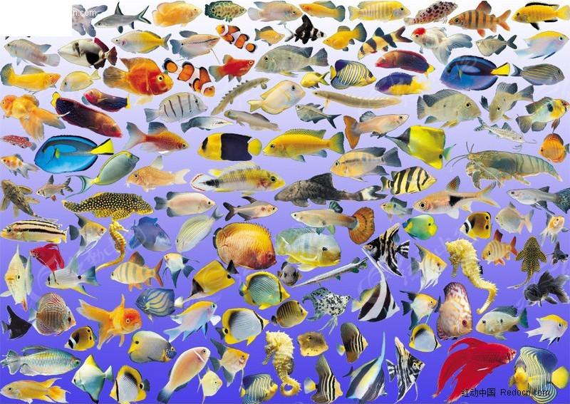 免费素材 psd素材 psd分层素材 动物 海洋鱼类素材大全  请您分享