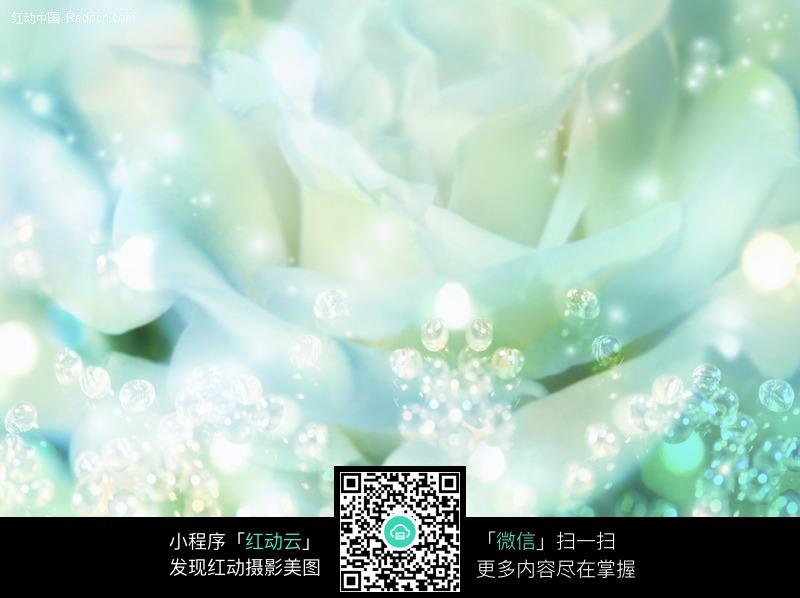 白色玫瑰花浪漫背景图片