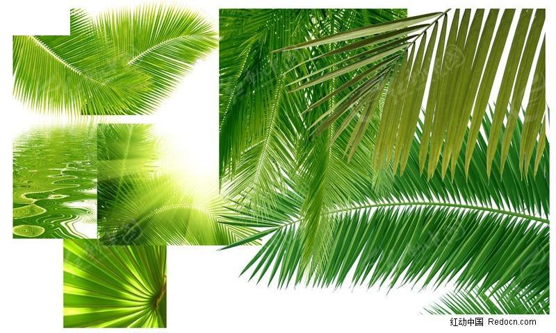 椰子树树叶特写素材