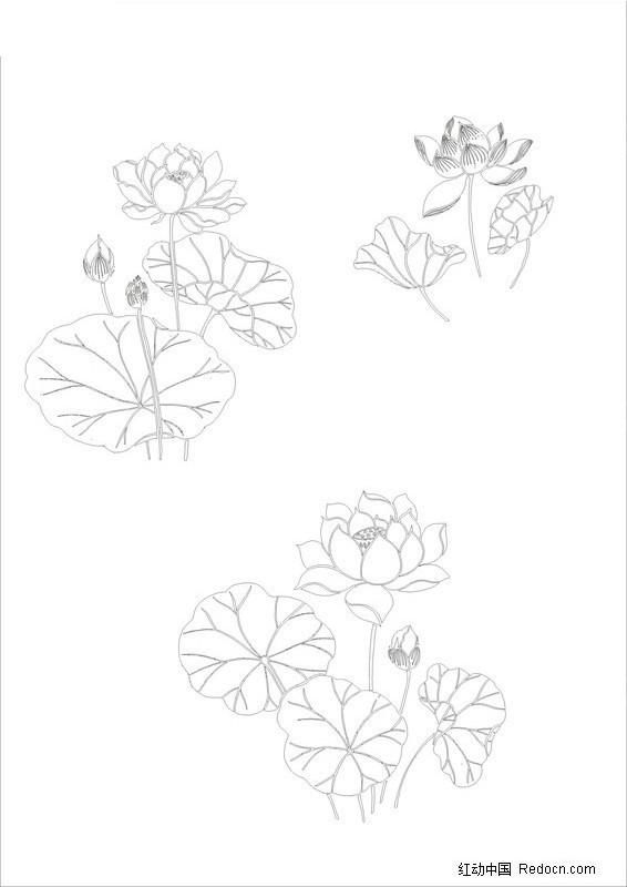 花卉 荷花  植物  中国风  优雅  矢量  线条 白描  中国元素 书画