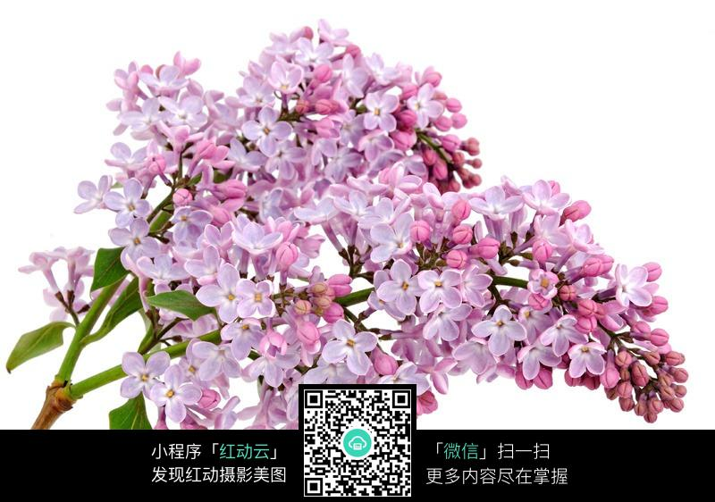 粉红色的小花图片