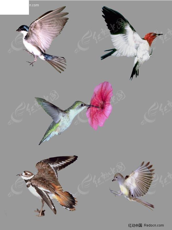 免费素材 psd素材 psd分层素材 动物 振翅飞翔的鸟分层素材  请您分享