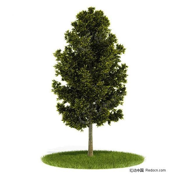 绿色树木三维模型图片