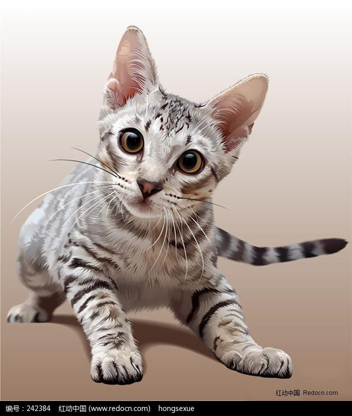 可爱的宠物猫图片_陆地动物图片
