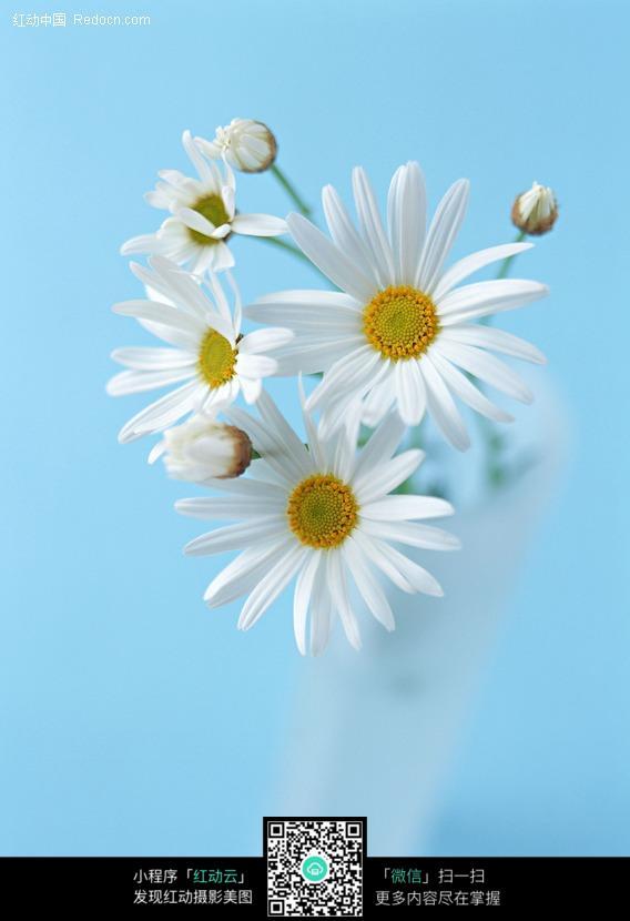 免费素材 图片素材 生物世界 花草树木 玻璃杯中的小白菊花