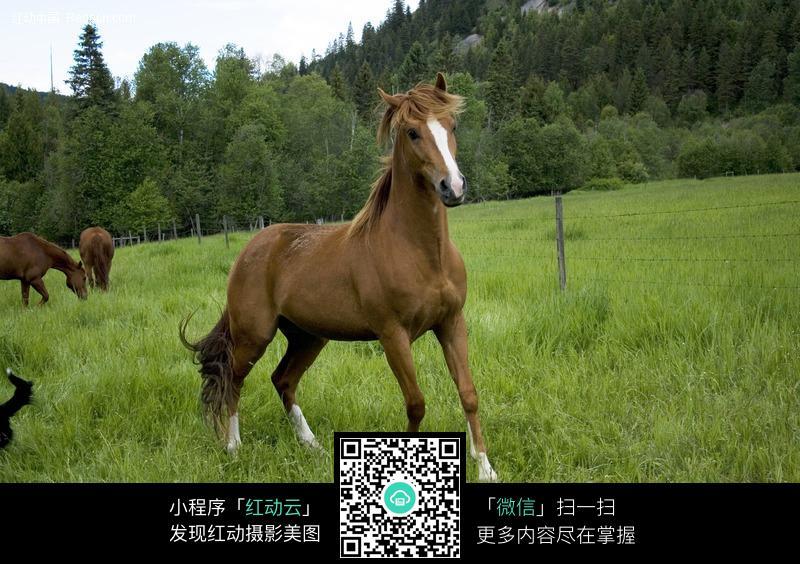 人与马的色情_草地上的棕黄色骏马