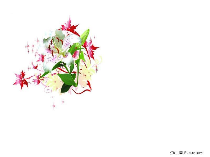 花朵与树叶图片