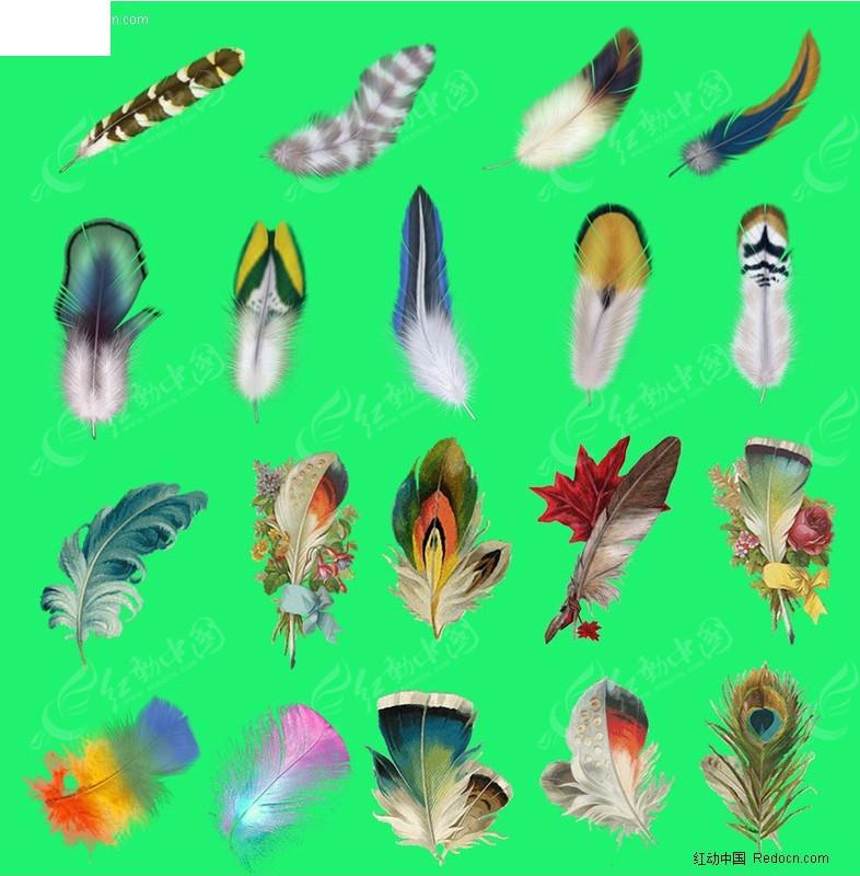 免费素材 psd素材 psd分层素材 动物 精美彩色羽毛图片大全