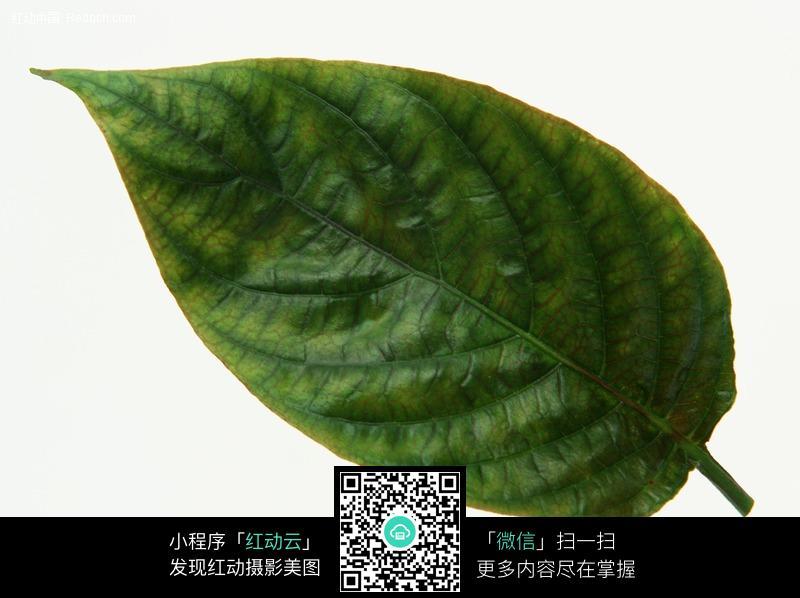 树叶素材图片_花草树木图片
