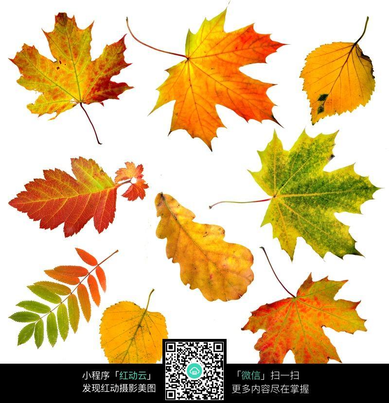 各种秋天的树叶图片_花草树木图片