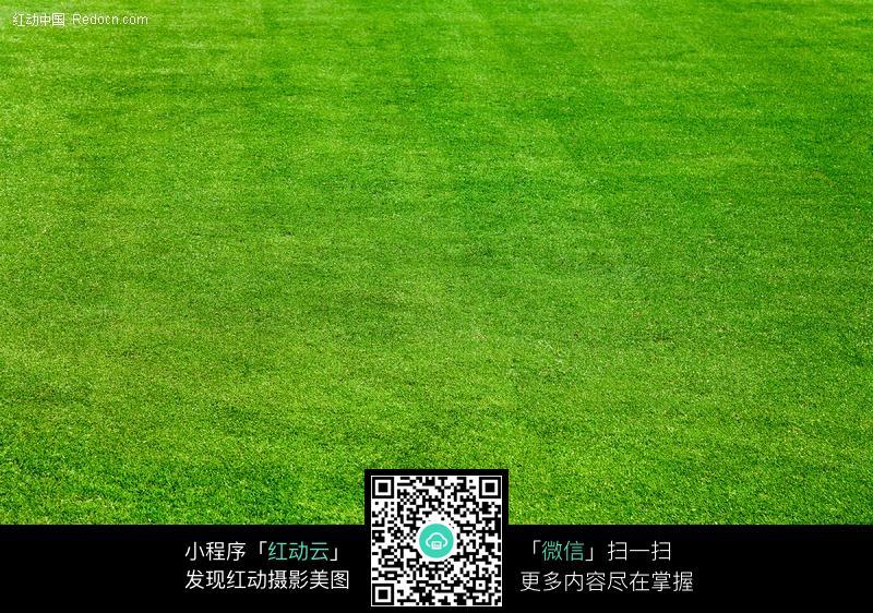 绿色的足球场草皮图片 高清图片