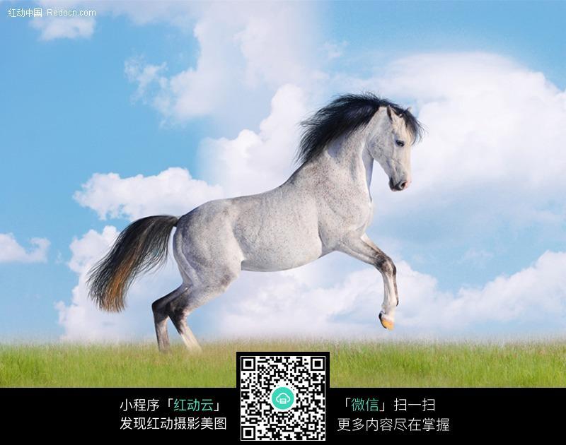 免费素材 图片素材 生物世界 陆地动物 白色骏马高清图  请您分享