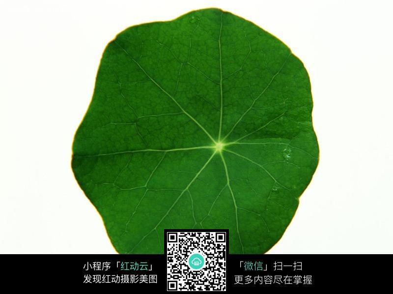 圆圆的一片树叶图片免费下载 编号287145 红动网