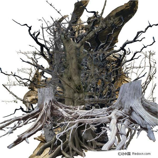售楼处树根手绘