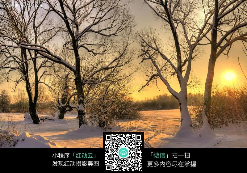 夕阳下的树林雪景