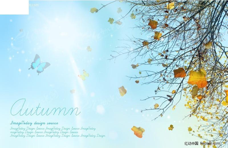 免费素材 psd素材 psd分层素材 风景 秋天阳光下的树枝与蝴蝶素材  请