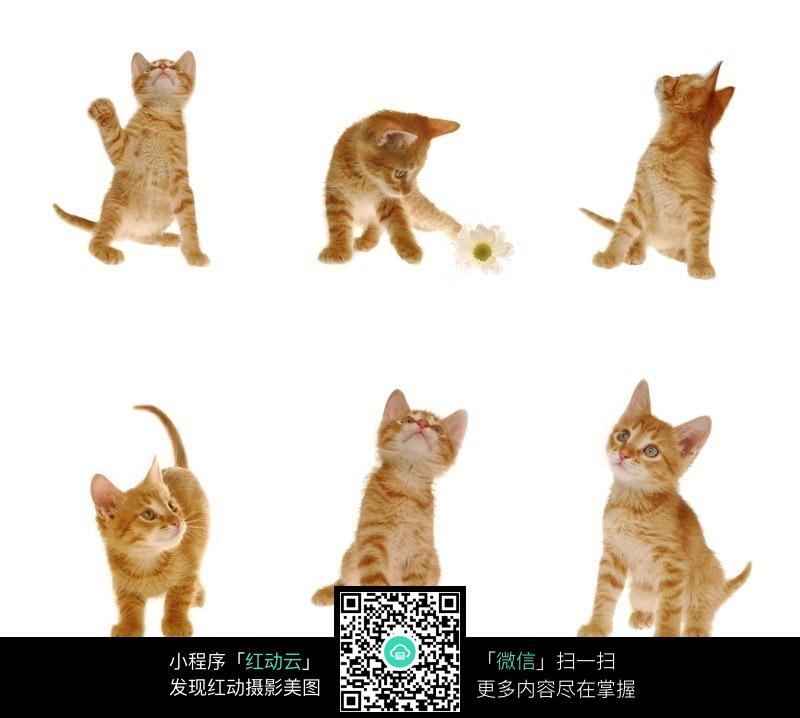 动物走路的姿势文字