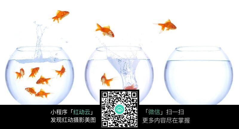 鱼缸和跳出水面的金鱼