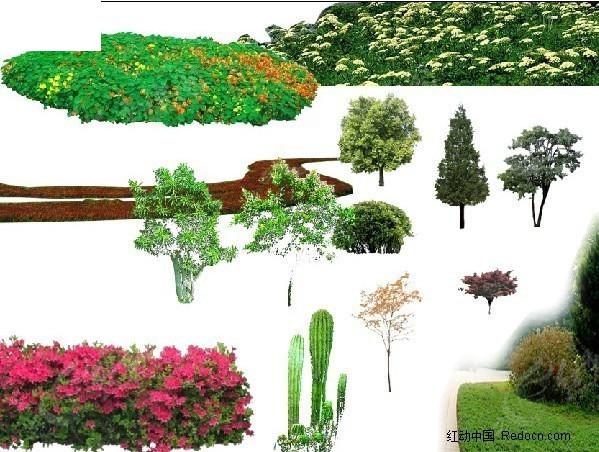 灌木 树木 园林植物 ps分层素材