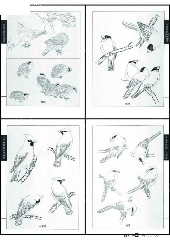 工笔画线描百鸟图 画法步骤