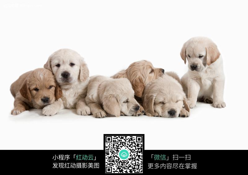 趴着的一排宠物狗图片_陆地动物图片