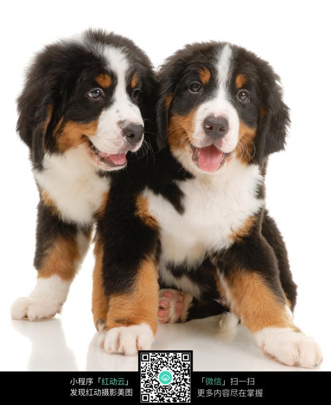 免费素材 图片素材 生物世界 陆地动物 趴在一起的两只宠物狗