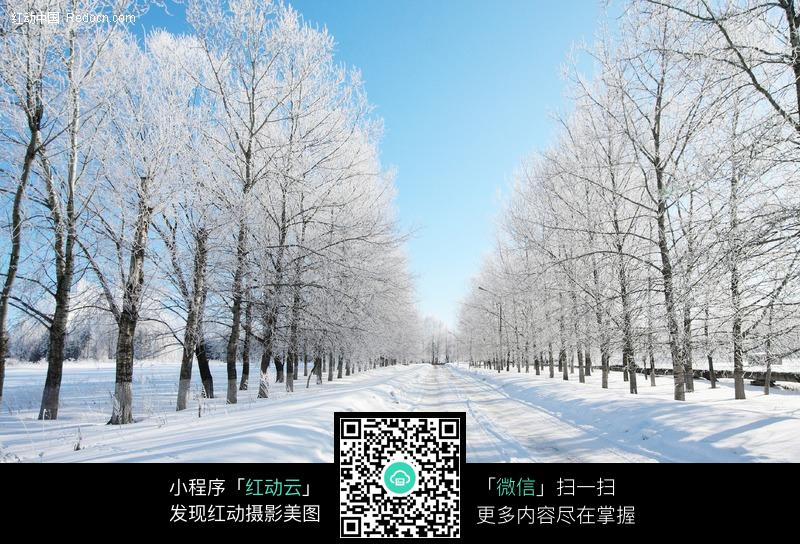 免費素材 圖片素材 自然風光 自然風景 白雪覆蓋的道路和路邊樹木  請