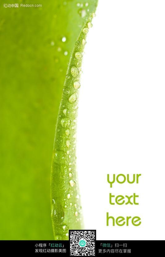 绿叶 树叶 叶片 生机 绿色 春色 水滴 水珠  植物图片 植物 摄影图片