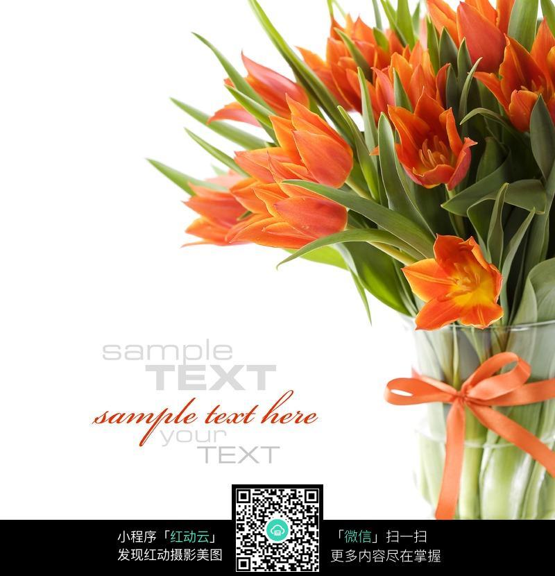 花瓶中的橘黄色郁金香_花草树木图片