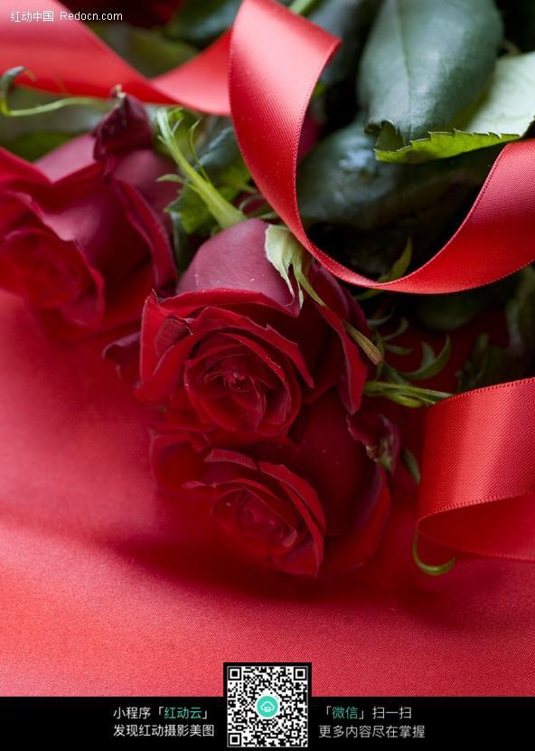 丝带和玫瑰花图片_花草树木图片