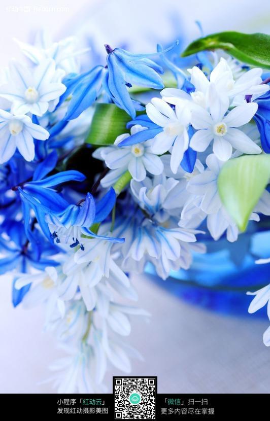 免费素材 图片素材 生物世界 花草树木 蓝色白色花图片