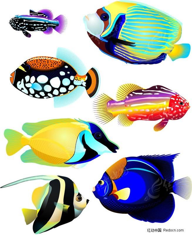 免费素材 矢量素材 生物世界 水中动物 几款色彩艳丽的海洋鱼类  请您