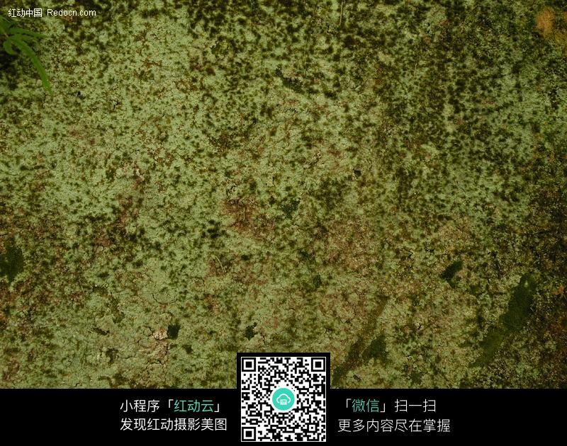 青苔苔藓背景