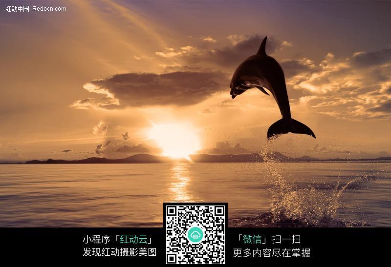 免费素材 图片素材 生物世界 水中动物 夕阳下跳出水面的海豚  请您