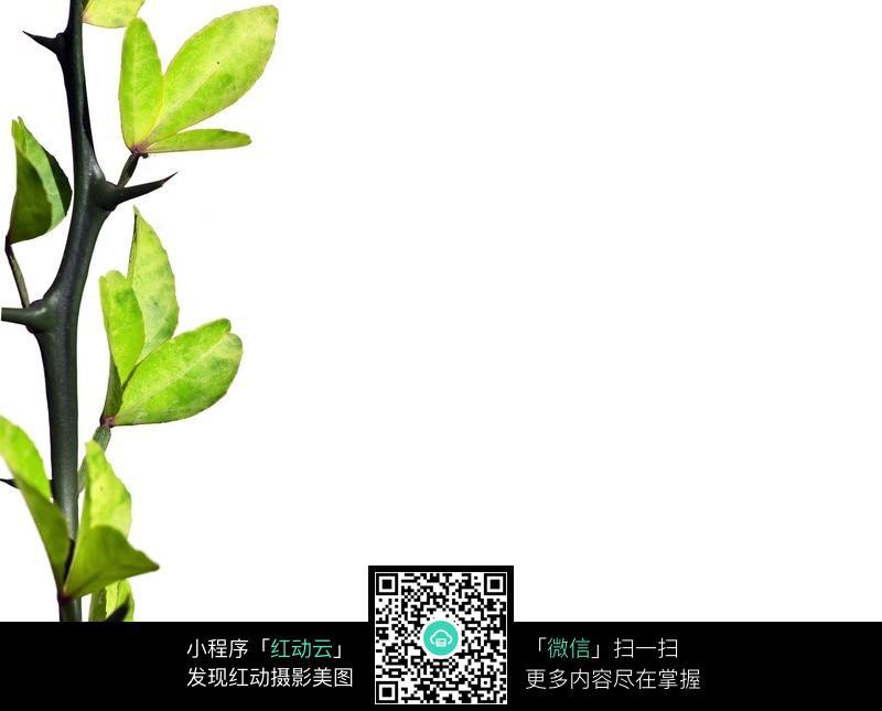 免费素材 图片素材 生物世界 花草树木 绿叶绿芽