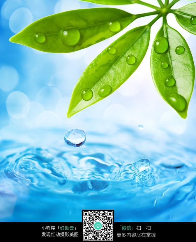 绿叶 叶片 树叶 叶子 水 水珠 水滴 植物图片 植物 摄影图片 植物照片