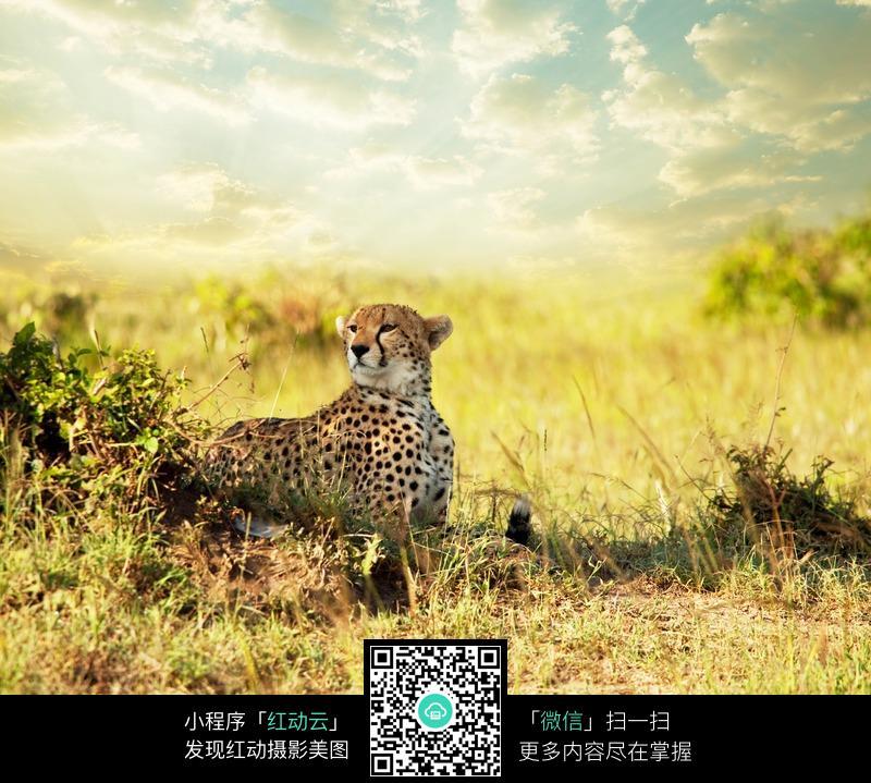 豹子风景_陆地动物图片