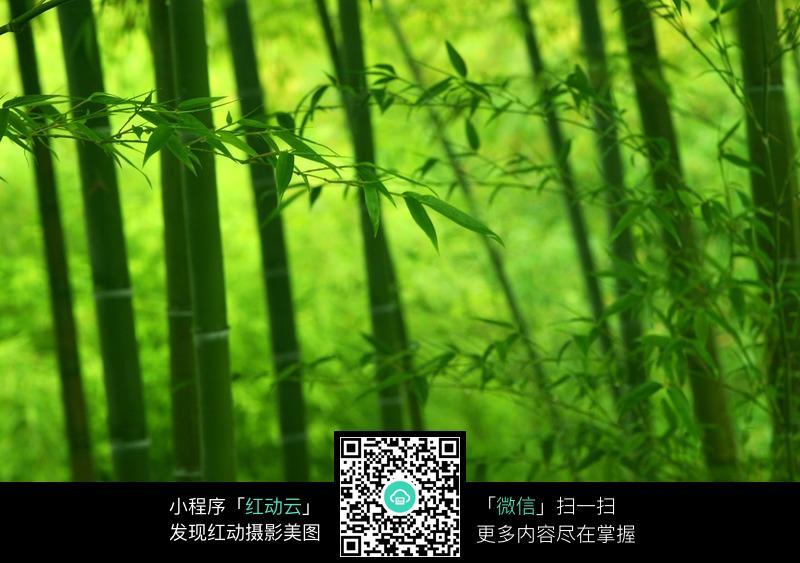 绿色竹叶竹子
