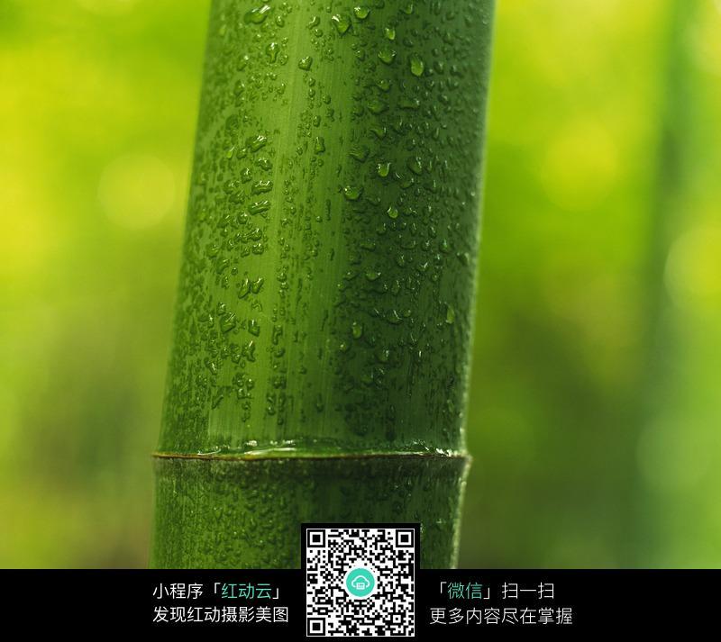 翠绿的竹子图片_花草树木图片