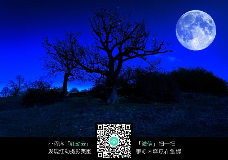 夜色中的月亮和树图片