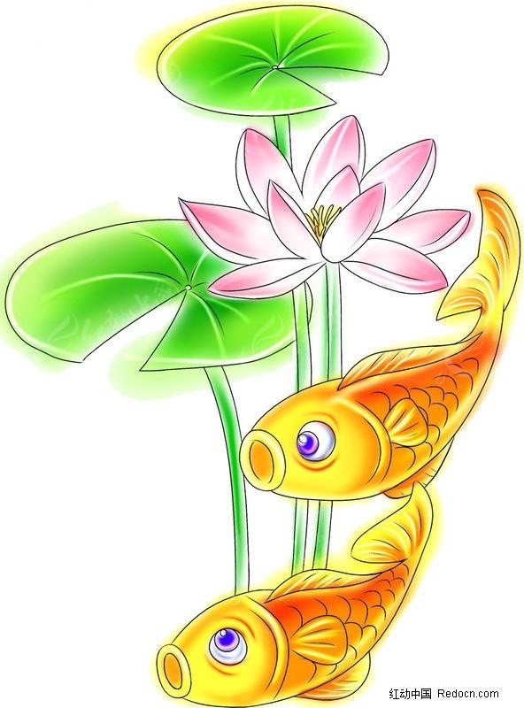 荷花红鲤鱼