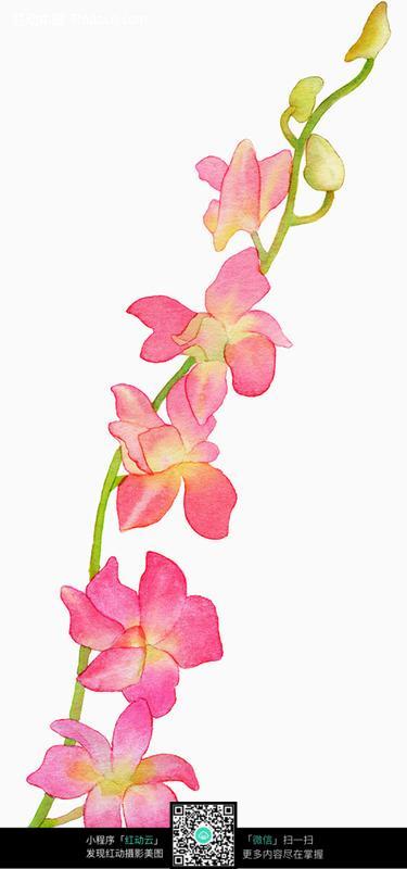 水彩手绘蝴蝶兰图片