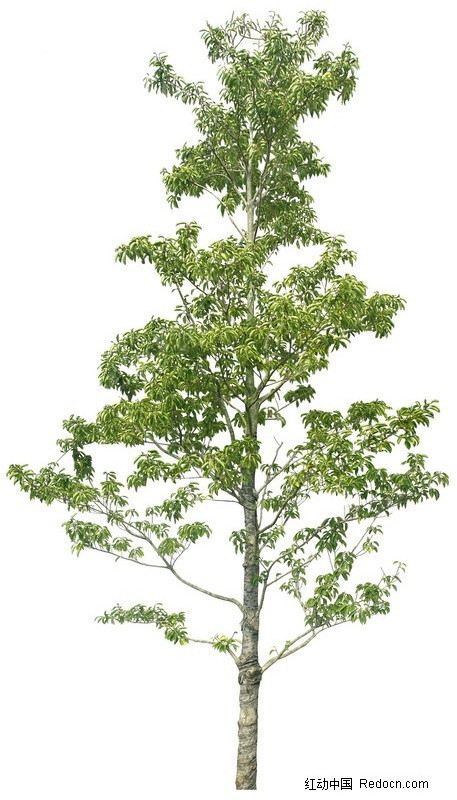 ps树木图片素材_植物_红动手机版