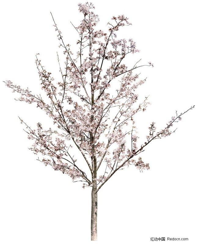 桃花树素材