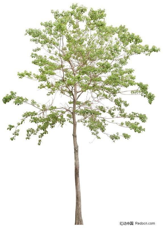 园林树木psd分层素材