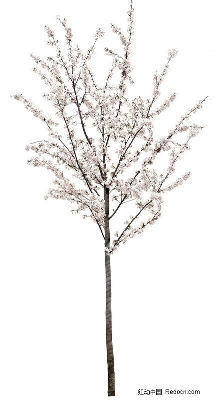 桃花树素材_植物; 桃花树ps素材图片下载分享;