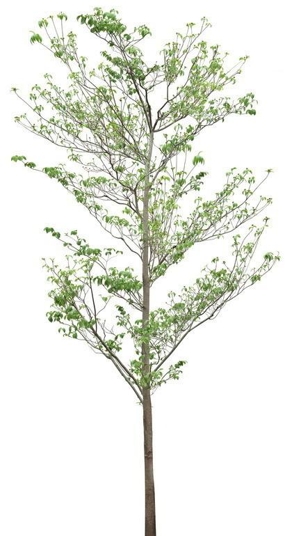 植物白底图
