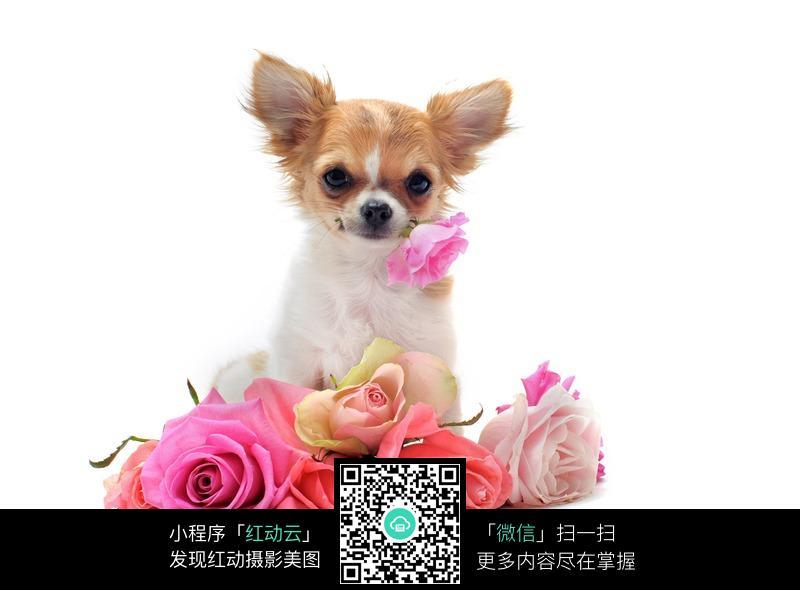 小狗和鲜花_陆地动物图片